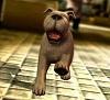 Gameloft поделилась скриншотами из The Adventures of Tintin