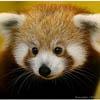 Вышел браузер Firefox 9.0 для Android