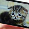Смартфоны HTC и Motorola нравятся все меньшему числу пользователей